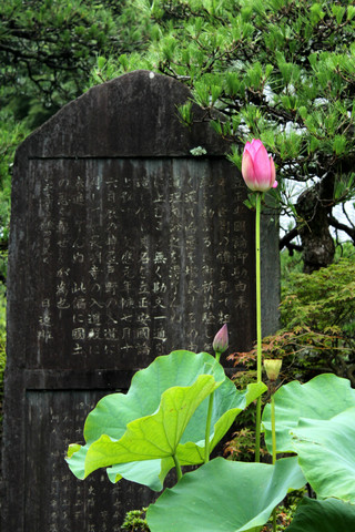 Kosokujihasu130704