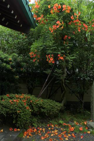 Kosokujinozenkazura130704