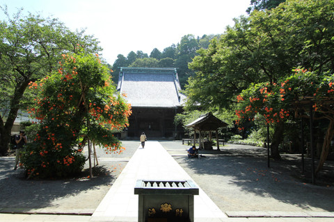 Myohonjinozenkazura130707