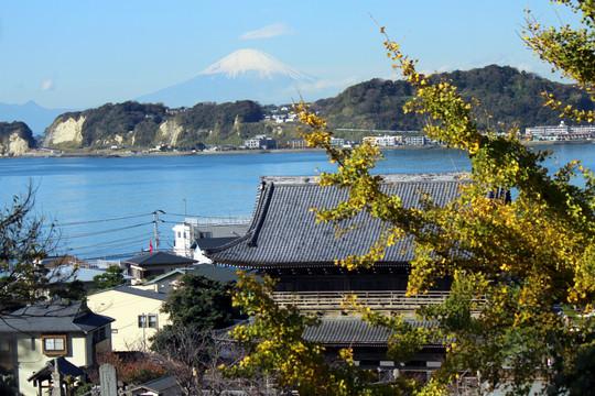Komyojiuranofuji131127