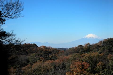 Hansobofuji131201