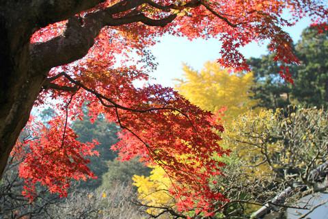 Tokeijikoyo1312032