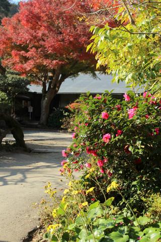 Jochijikoyo1312042