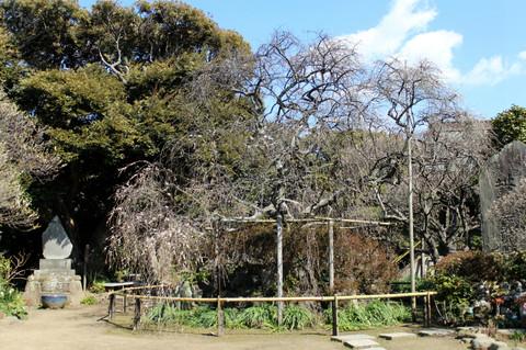 Hokaijisidareume140307