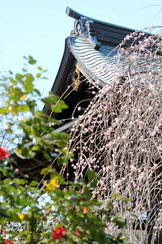 Hokaijisyoro140324