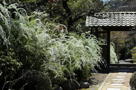Kaizojiyukiyanagi140331