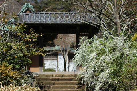 Kaizojiyukiyanagi1403314