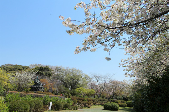 Genjiyamasakura140408