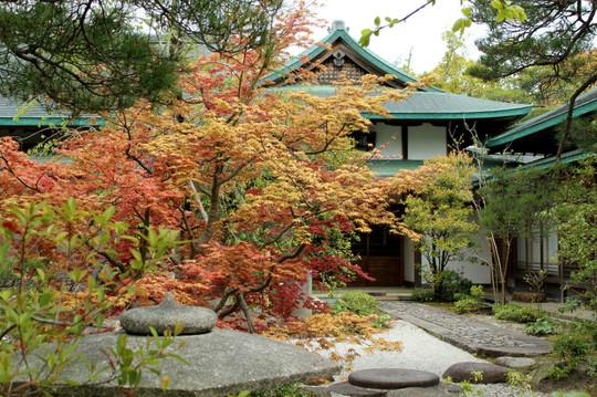 Hachimanguharumomiji140420