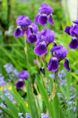 Iris140429