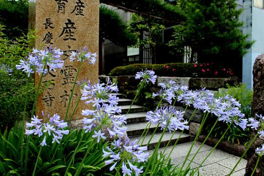 Daigyojimonzen140627