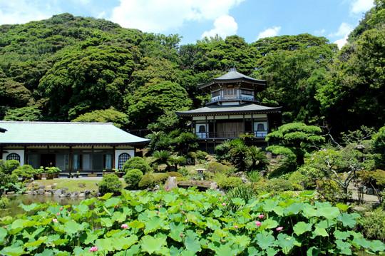 Komyojihasu140708