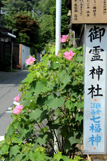 Fuyo140729
