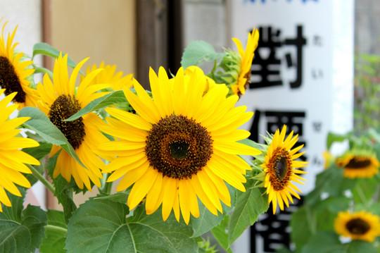 Himawari140729