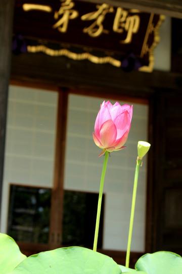 Kosokujihasu1407293