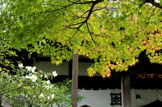 Ankokuronjikoyo1411072
