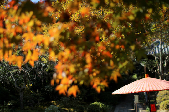Kaizojikoyo1411193