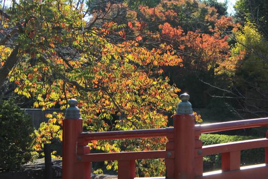 Hachimangukoyo1411213