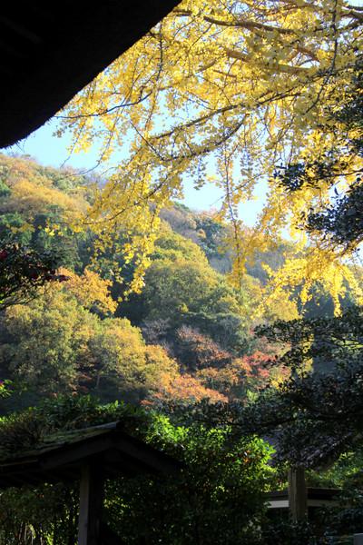 Hokokujikoyo1412023_2
