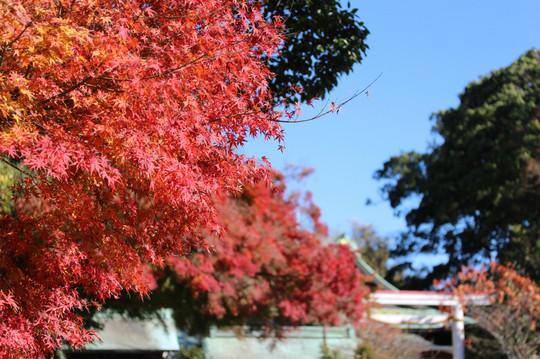 Kamakuragukoyo141202