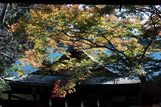 Kamakuragukoyo1412022