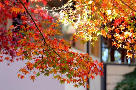 Kamakuragukoyo1412023