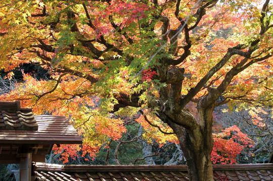 Tokeijikoyo1412032