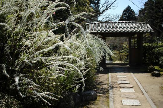 Kaizojiyukiyanagi150326
