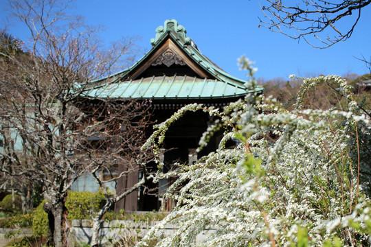 Kaizojiyukiyanagi1503262