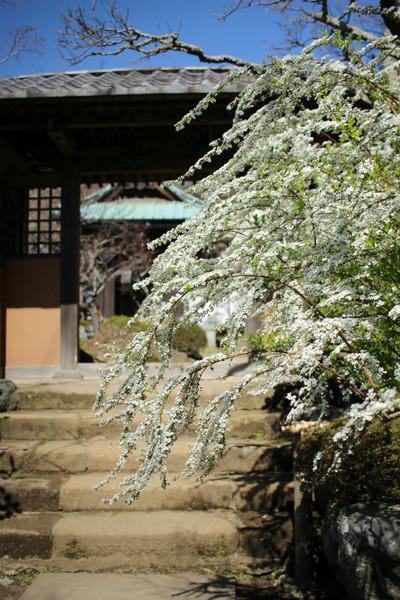 Kaizojiyukiyanagi1503263