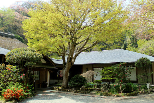 Jochijikaede150406