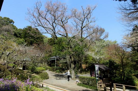 Jochijitachihigan150406