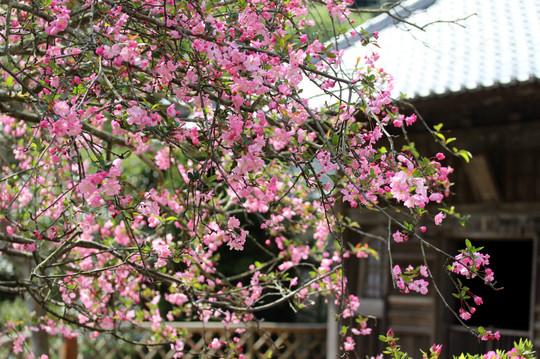 Kaizojikaido1504094