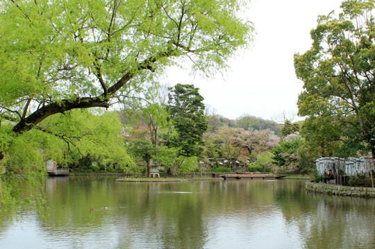 Hachimangu150412_2