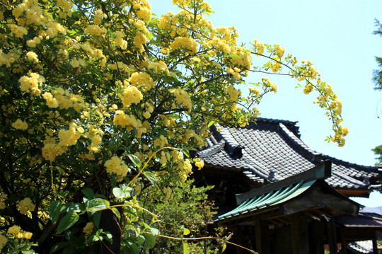 Tatsumijinja150426_2