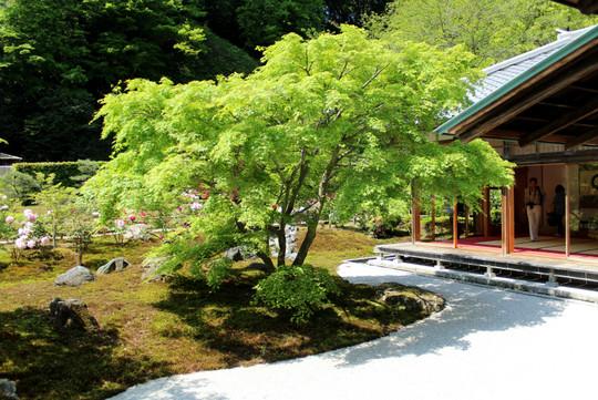 Chojujiniwa150426