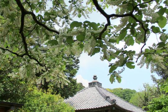 Jochijihakuunboku150508