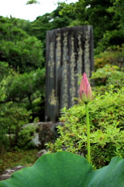 Kosokujihasu150617