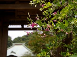 Kaizohagi070706