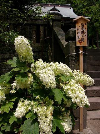 Goryokasiwaba070628