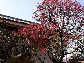 Hokaikobai070213