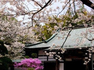 Hokokusakura070401