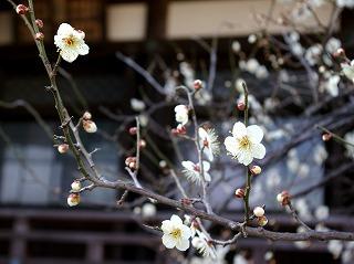 Hongakuhakubai070202