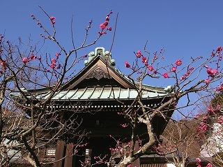 Kaizokobai070131