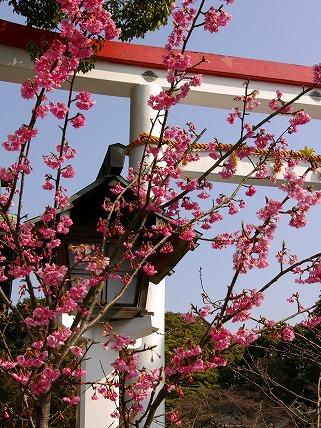 Kamakuragu070208