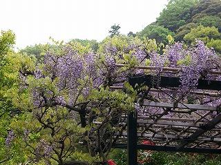 Koshokufuji070423