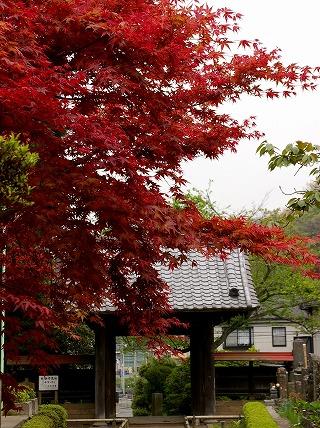 Koshokumomiji070423