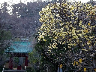 Kosokurobai070122_1