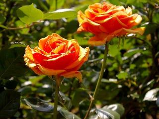 Orange070515