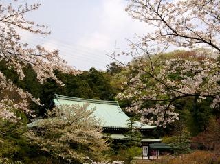Ryuhosakura070407